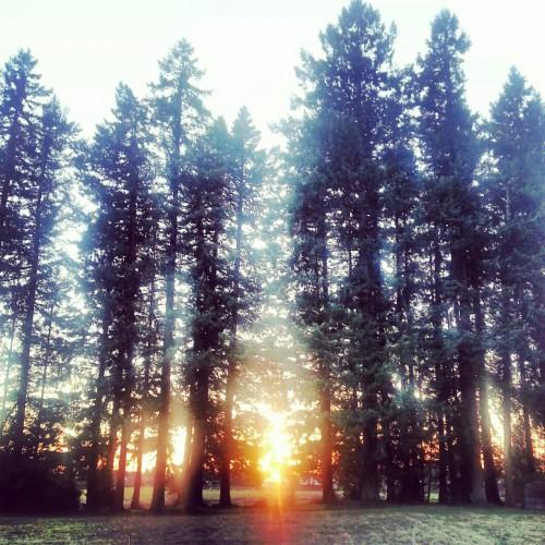 Trees in Oregon