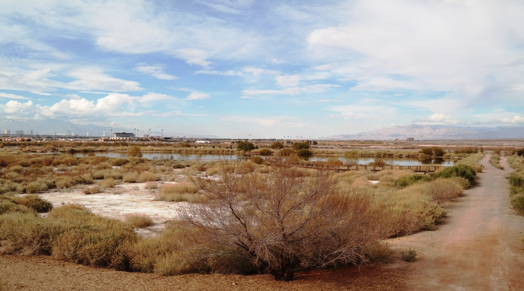 The Henderson, NV Bird Viewing Preserve, with the Las Vegas Strip in the distant background.