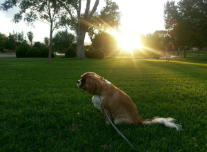 Jet, at Bicentennial Park in Boulder City.