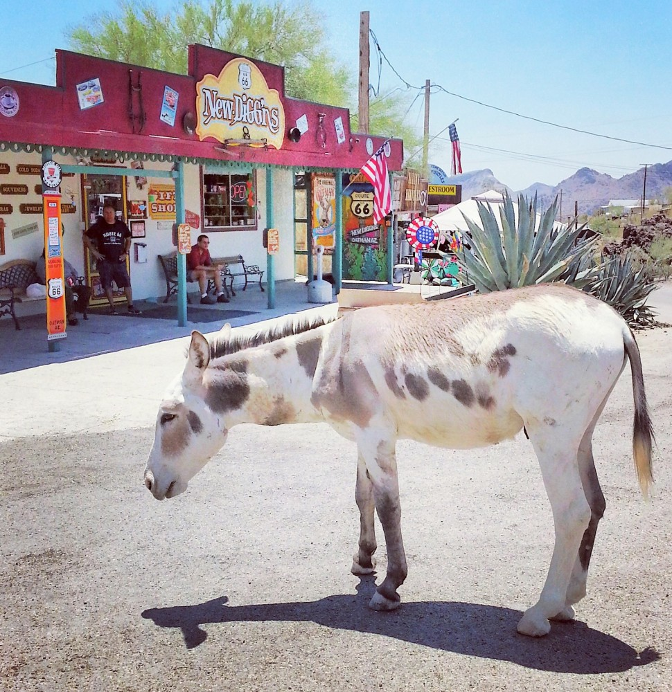 Old Western Charm and Burros Galore in Oatman, Arizona (2/6)
