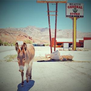 Burro in Nevada