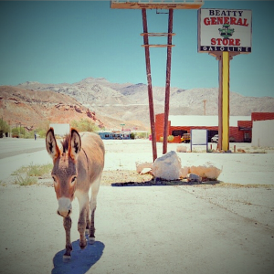Burro in Nevada