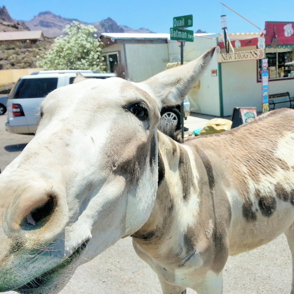 Old Western Charm and Burros Galore in Oatman, Arizona (4/6)