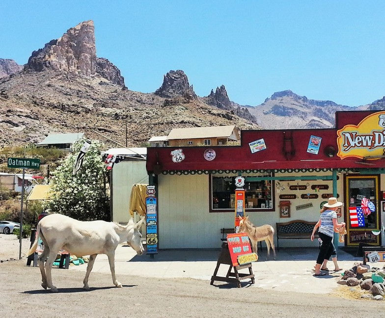 Checking out the charming burro-filled town of Oatman, AZ.